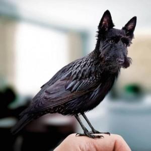 違和感を感じない!犬と鳥を合成した写真まとめ